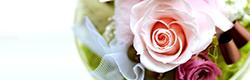 読み物…お花選びに迷った時は、花言葉でギフトを選ぶのもあり!花言葉のすすめ